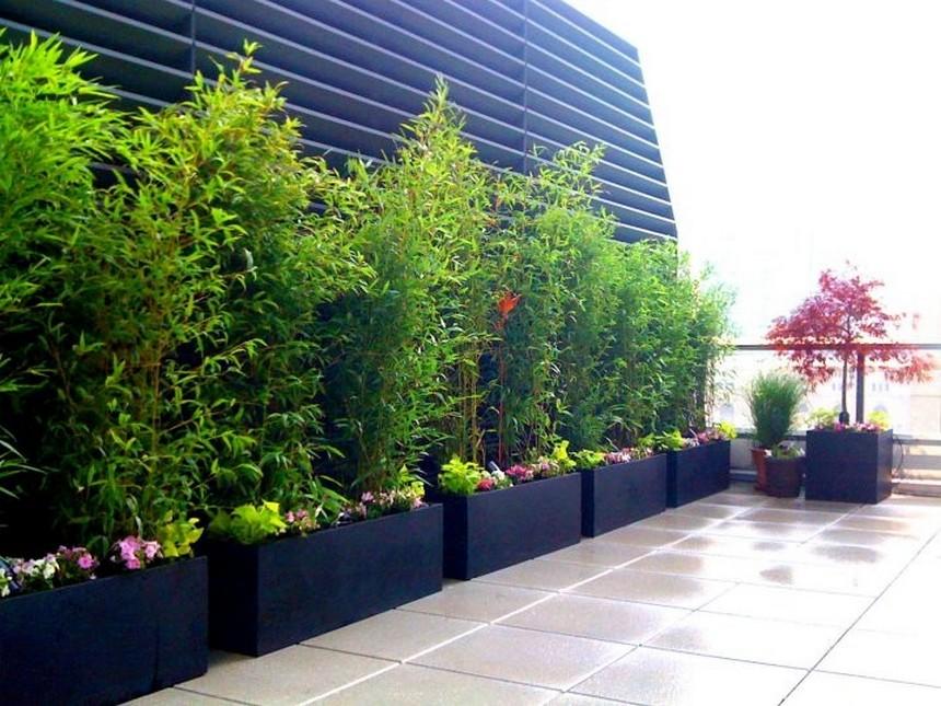 Container Gardening Ideas (45)